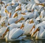 Garzas blancas en el lago
